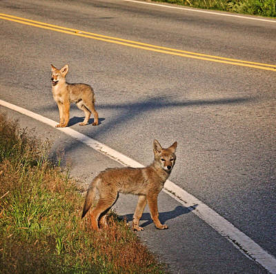 Poster featuring the photograph Coyotes At The Crossroads by Peggy Collins