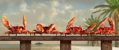 Crab Dance Poster by Daniel Eskridge