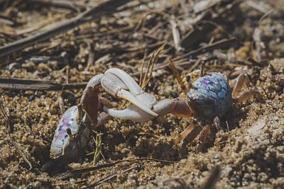 Crab Fight Poster by Matt Owen