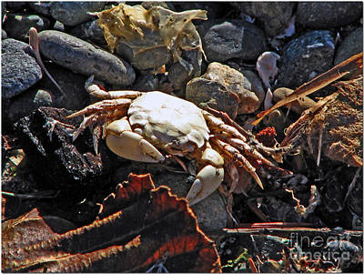Crabby Poster by Chris Anderson