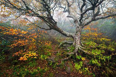 Craggy Gardens North Carolina Blue Ridge Parkway Autumn Nc Poster