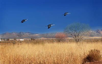 Cranes In Flight Poster by Barbara Manis