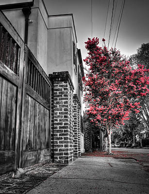 Crape Myrtles In Historic Downtown Charleston 2 Poster