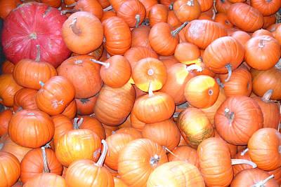 Crate Of Pumpkins Poster
