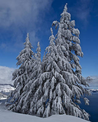 Crater Lake Trees  Poster