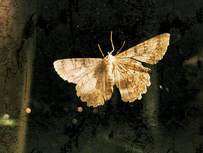 Creature Of The Night - Moth Poster by Patricia Januszkiewicz