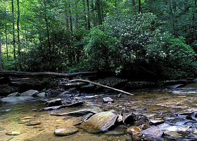 Creek At Pisgah Forest Poster by Chrystyne Novack