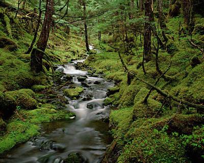 Creek In Temperate Rainforest Poster by Matthias Breiter