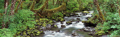 Creek Olympic National Park Wa Usa Poster by Panoramic Images