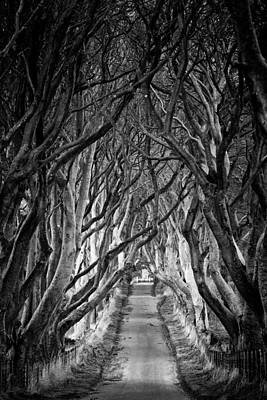 Creepy Dark Hedges Poster by Nigel R Bell