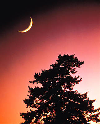 Crescent Moon Over Trees In Front Of Poster