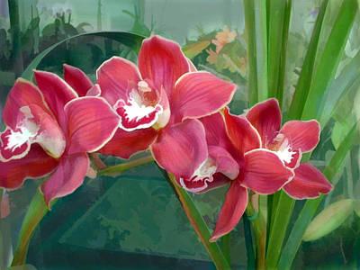 Crescent Of Rose Cymbidium Orchids Poster