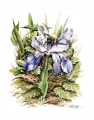 Poster featuring the painting Crested Dwarf Iris by Bob  George