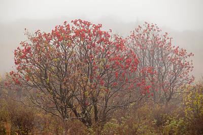 Crimson Fog Poster by Melinda Ledsome