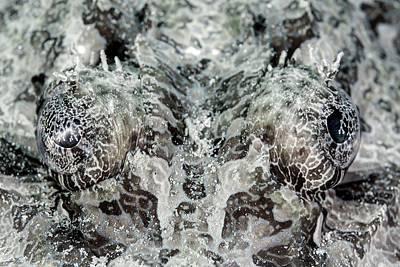 Crocodilefish Eyes Poster by Ethan Daniels