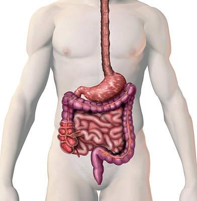 Crohn's Disease Poster by Carol & Mike Werner