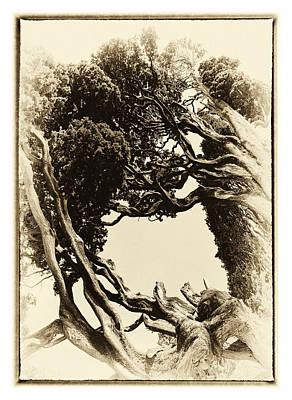 Crooked Trees Poster by Hakon Soreide