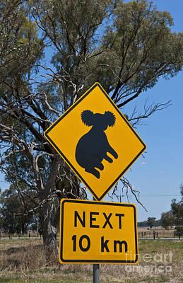 Crossing Sign For Koala Bear, Australia Poster