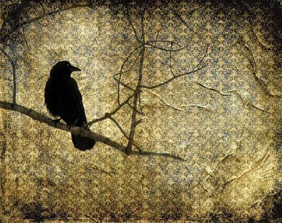 Crow In Damask Poster