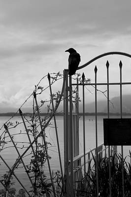 Crow On Gothic Gate Poster by Colleen Williams
