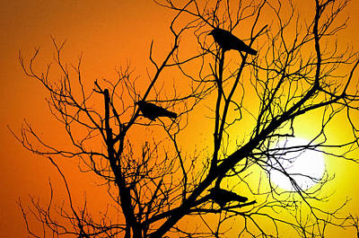Crows At Sunset Poster by Bill Cannon