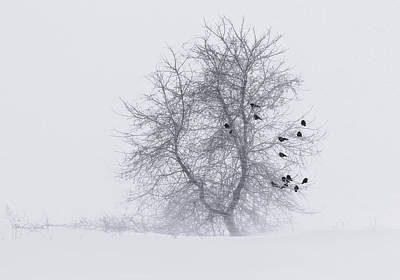 Crows On Tree In Winter Snow Storm Poster