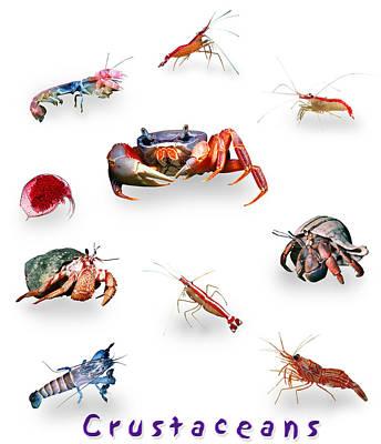 Crustaceans Poster by Wernher Krutein