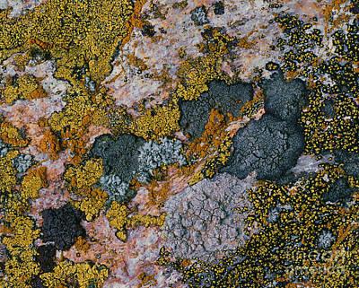 Crustose Lichens Poster by Hermann Eisenbeiss