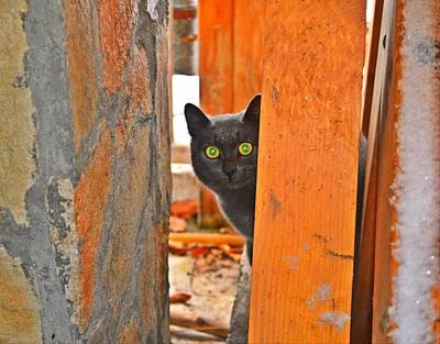 Cat Curiosity Poster