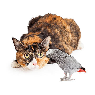 Curious Cat Looking At Bird Poster by Susan Schmitz