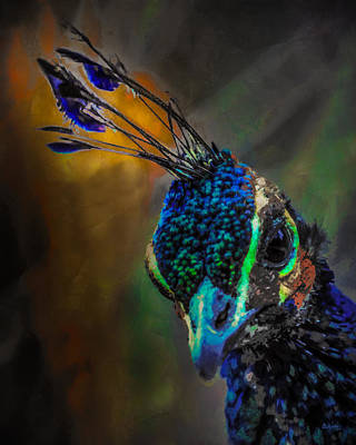 Curious Peacock  Poster by Ernie Echols