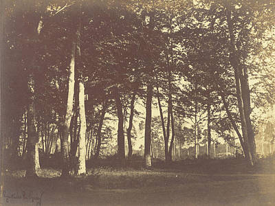 Curtain Of Trees Gustave Le Gray, French Poster by Litz Collection