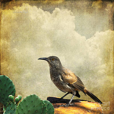 Poster featuring the photograph Curved Bill Thrasher by Karen Slagle