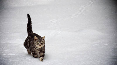 Cute Cat In Snow Poster