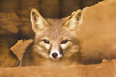 Poster featuring the photograph Cute Fox  by Brian Cross