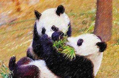 Cute Pandas Play Together Poster by Lanjee Chee