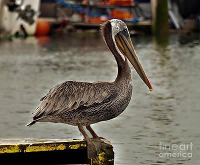 Cute Pelican Poster