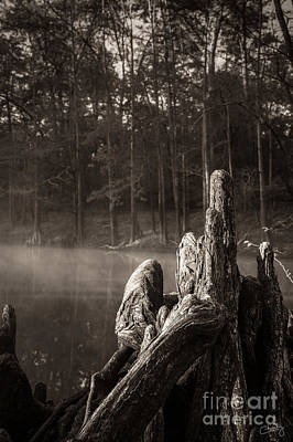 Cypress Knees In Sepia Poster