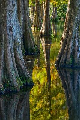 Poster featuring the photograph Cypress Reflections by Rob Wilson