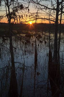 Cypress Swamp At Sunrise Poster