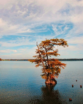 Cypress Tree In Autumn I Poster by Jai Johnson