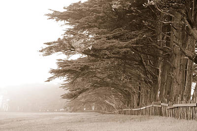 Cypress Trees Along A Farm, Fort Bragg Poster by Panoramic Images
