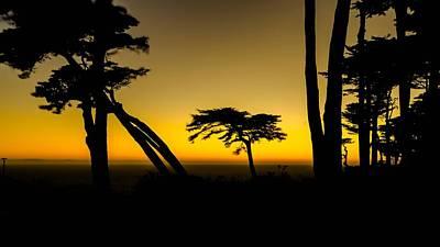 Cypress Trees  Santa Cruz  California Poster by Ron Williams