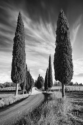 Cypress Trees - Tuscany Poster by Rod McLean