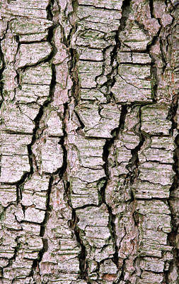 Cyprus Cedar Bark Abstract Poster by Nigel Downer