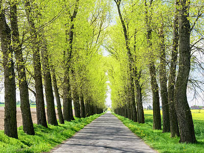 Czech Republic Tree Lined Road Poster