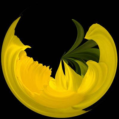 Daffodil Arc Poster by Cyndy Doty