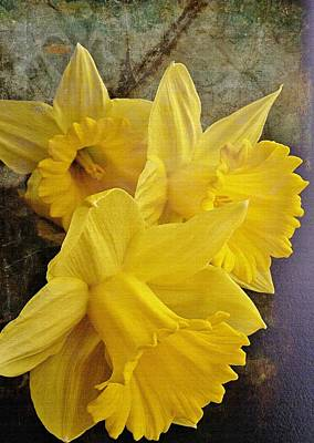 Poster featuring the photograph Daffodil Burst by Diane Alexander