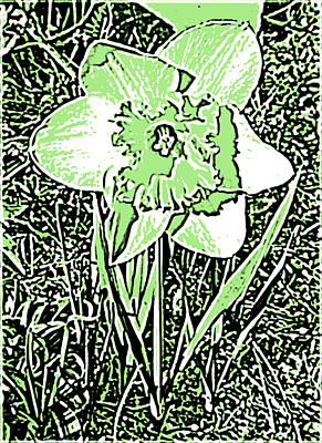 Daffodil Pen And Ink In Green Poster