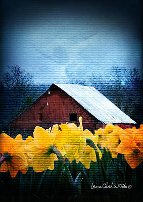 Daffodils And A Red Barn Poster by Lena Wilhite